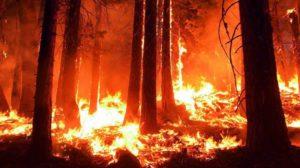 今年の異常な高温は、世界中で観測されており、山火事も多発しています。