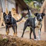 発症したら致死率100%の感染症!狂犬病が発生していないわずか12の国・エリアとは?