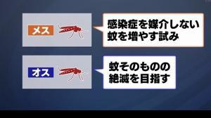 日本の最先端の研究では、蚊の遺伝子や生態系を利用した感染症の撲滅に取り組んでいます。